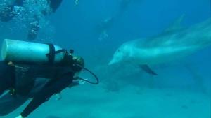 eilat-diving
