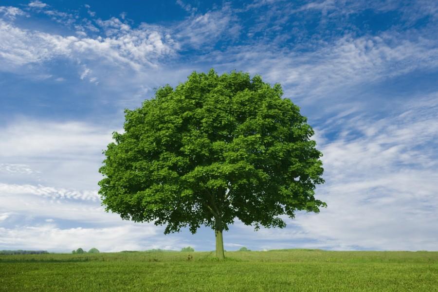 træ-1-900x600