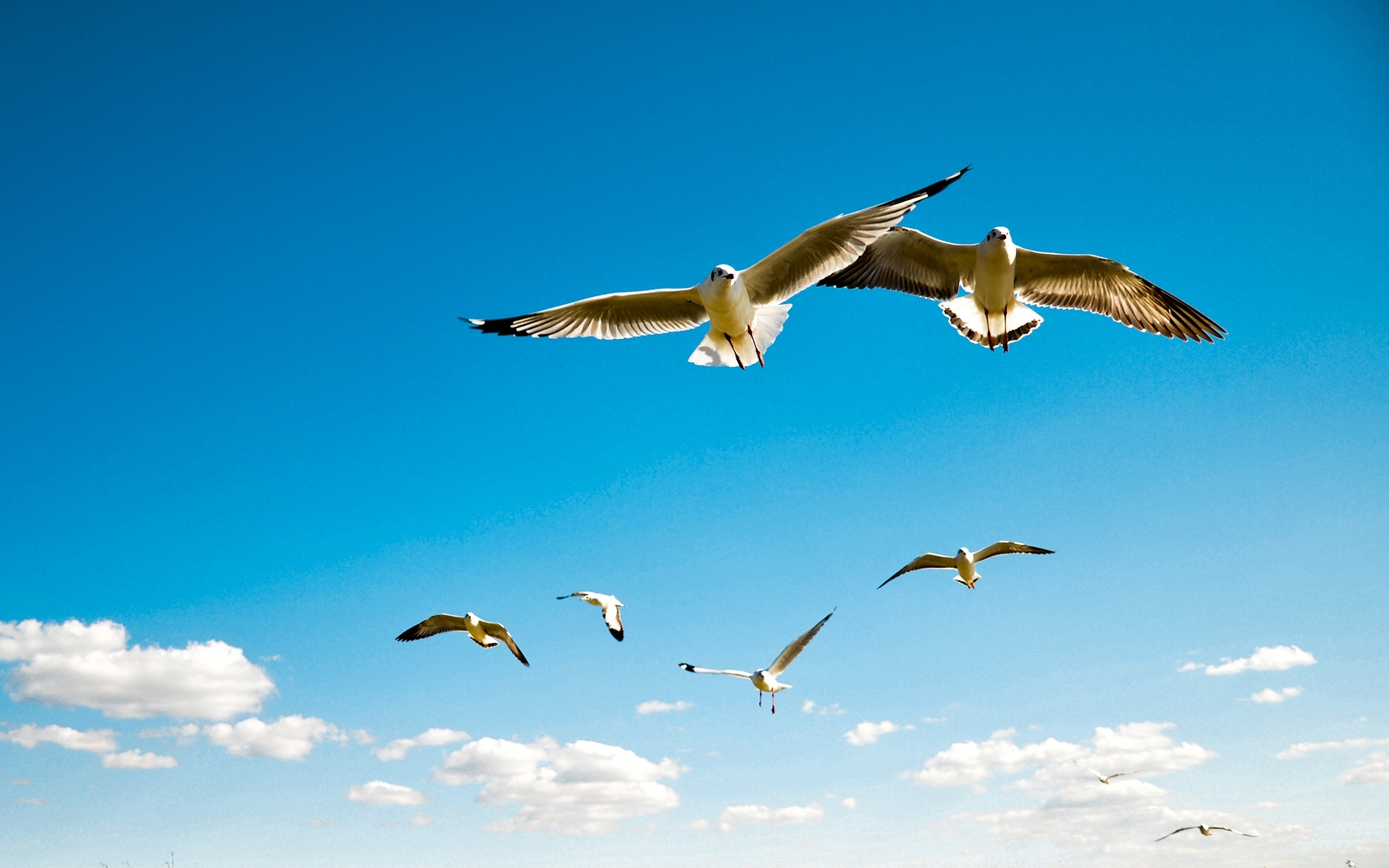 flying-birds-in-sky