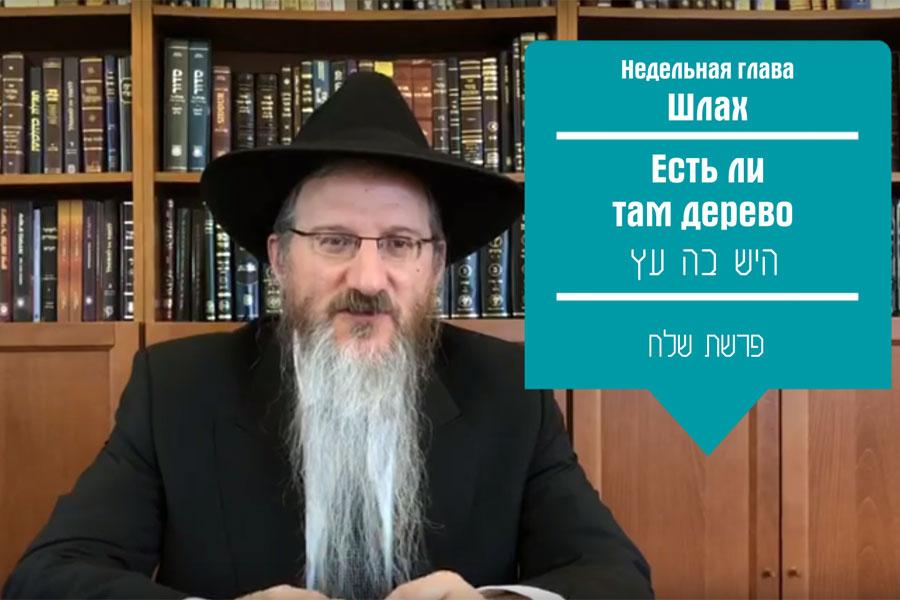 lazar-shlah